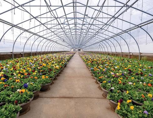indoor flower nursery greenhouse
